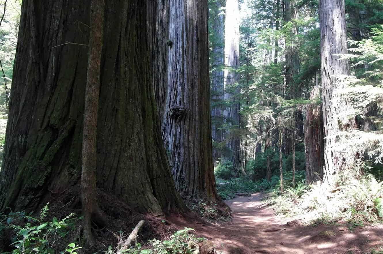 redwood-state-park-california-01