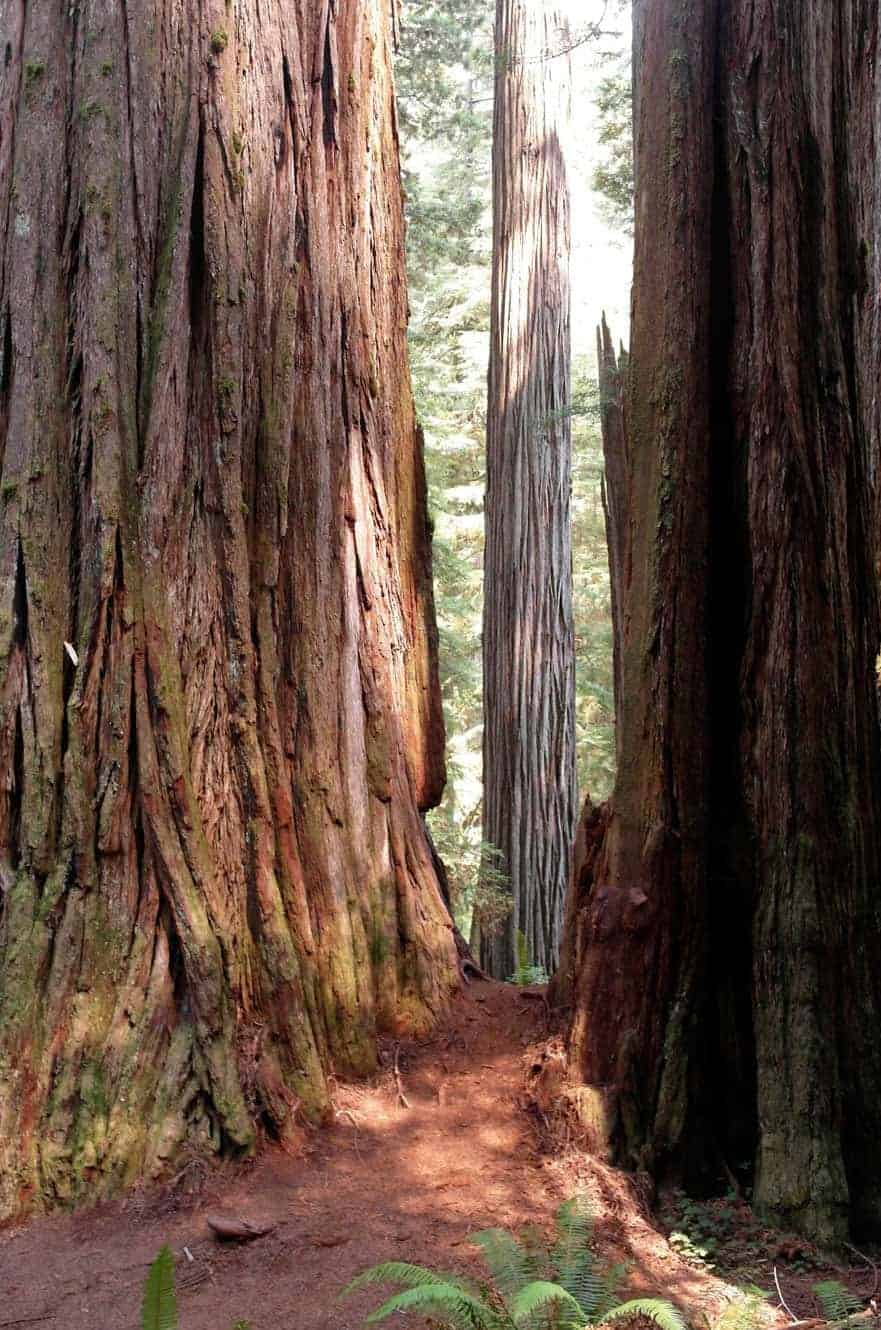 redwood-state-park-california-02