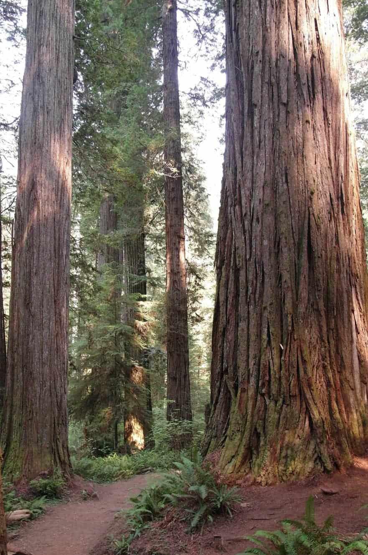 redwood-state-park-california-03