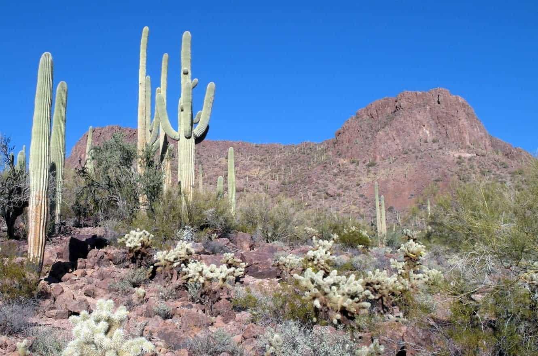 saguaro-02