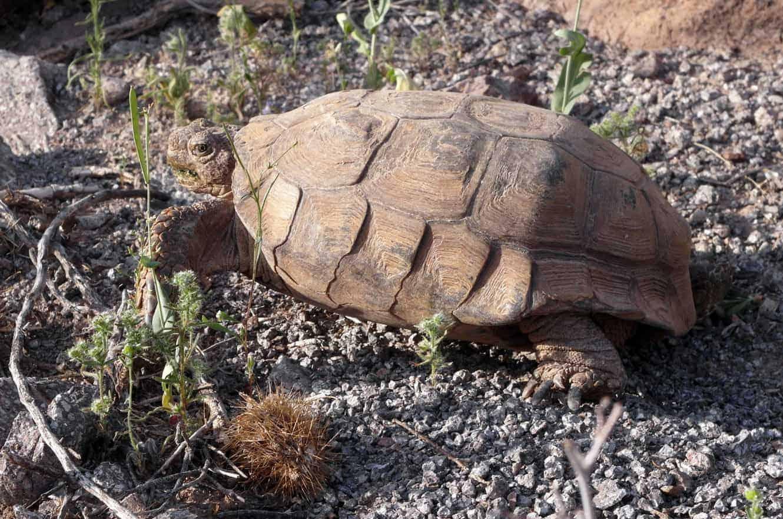 saguaro-05