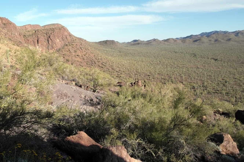 saguaro-06