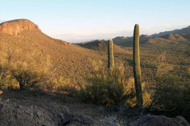 saguaro-08