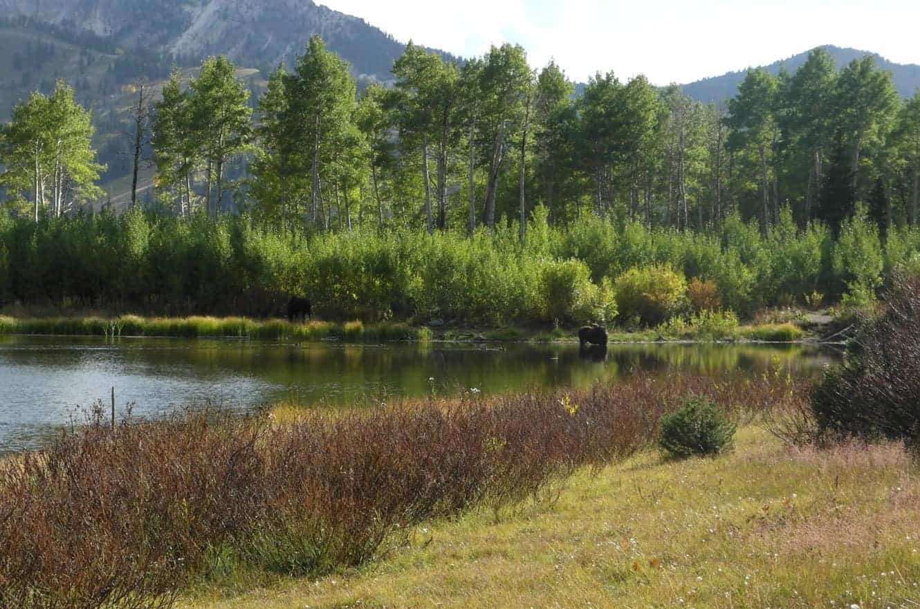 Willow Heights Trail Big Cottonwood Canyon Ut My Buzz About
