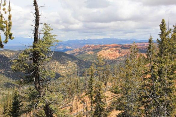 Proctor Canyon, Dixie National Forest