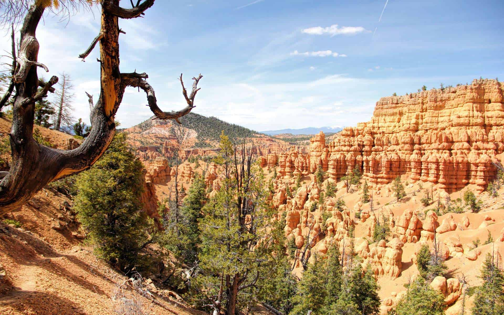 Red Canyon Dixie National Forest Utah My Buzz About